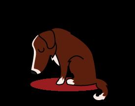 Dog hanging its head