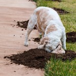 Intestinal dog worms and their symptoms