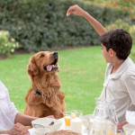Top 15 human foods your dog shouldn't eat