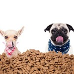 How much and how often should I feed my dog?
