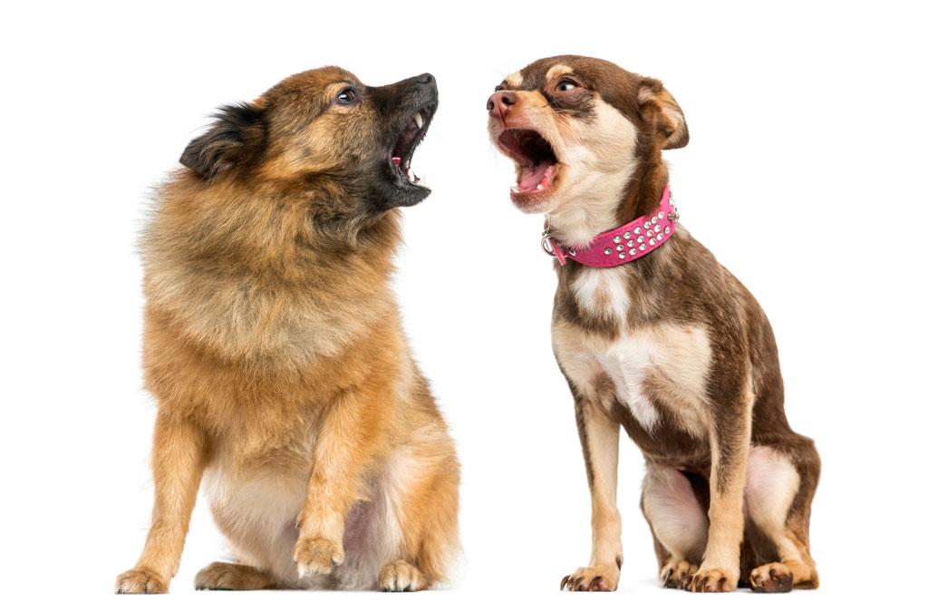 DIg-In-barking-social_4.jpg