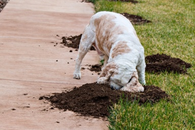 Dig-In-dog-worms-1.jpg
