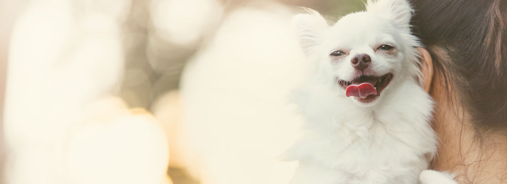 Dig-In-happy-dog-1.jpg
