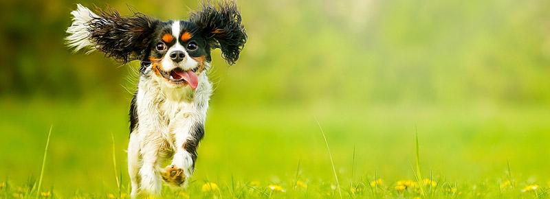 dig-in-happy-dog3