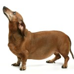 5 ways to help your dog loose weight