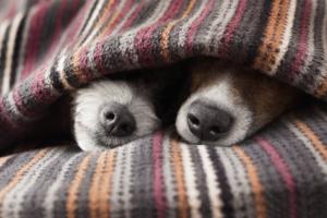 Dig in gravy powder winter dogs