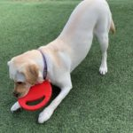 Customer Journey: Help Getting Your Labrador to Poo right
