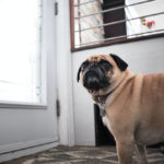 5 ways to ease your dog's separation anxiety post isolation