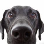 5 Common dog behaviours explained