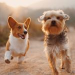 How Can I Improve My Dog's Gut Health?